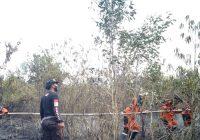 Karhutla Hanguskan 8 Hektare Gambut dan Semak Belukar